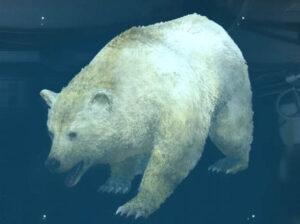h bear 300x224 Metal Gear Solid V Phantom Pain –  Trofeum Conservation