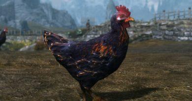 chicken HD