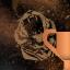 5 Trofea i osiągnięcia: Far Cry 4